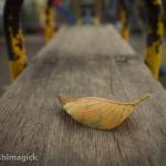 秋を告げる