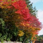 紅葉の高野山 その6 壇上伽藍編1